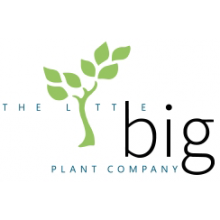 The Little Big Plant Company