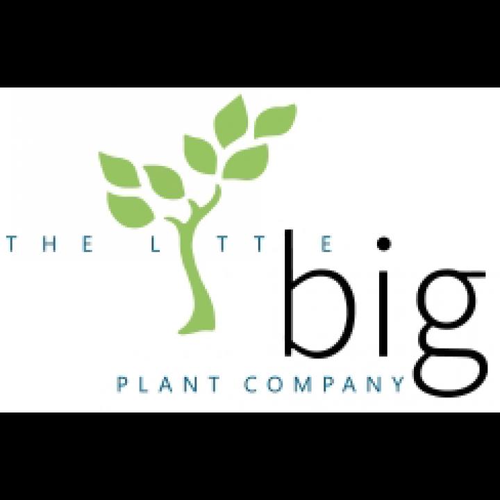 The Little Big Plant Company